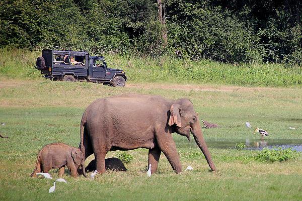 Spielende braune Elefanten
